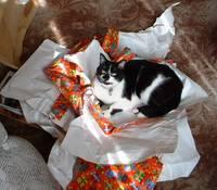 Packagedcat